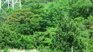 淡路島の植生
