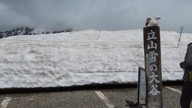 雪の大谷15