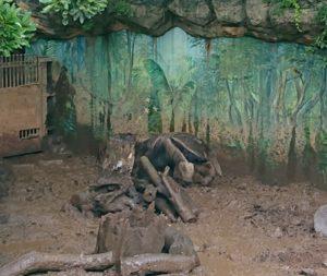 江戸川区自然動物園のオオアリクイ